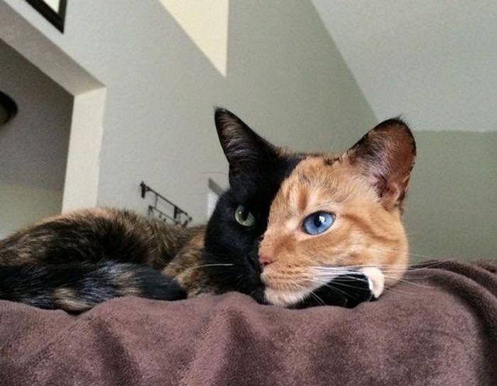 39 gatinhos que tem características únicas 17