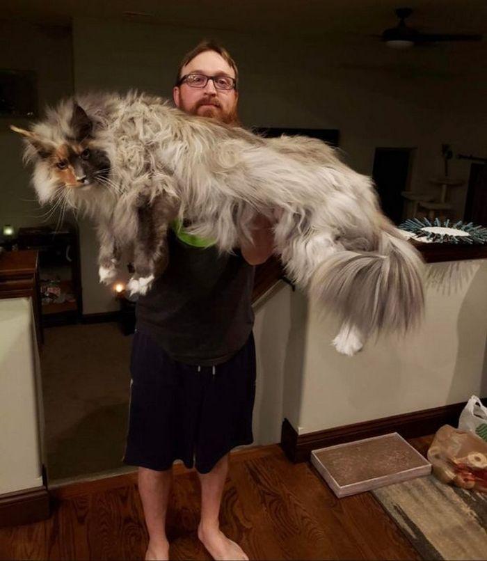 39 gatinhos que tem características únicas 20