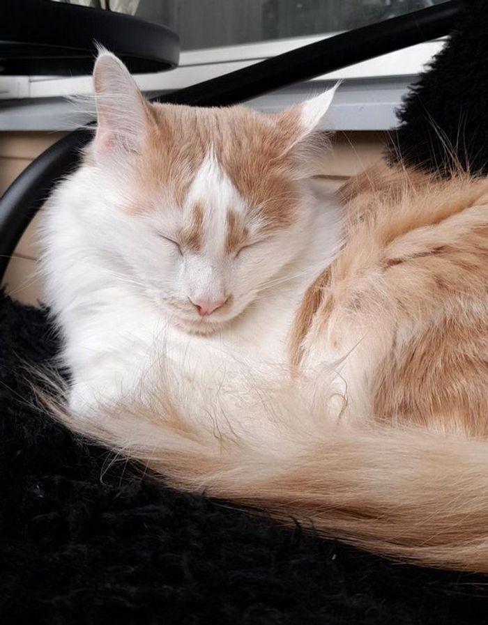 39 gatinhos que tem características únicas 24