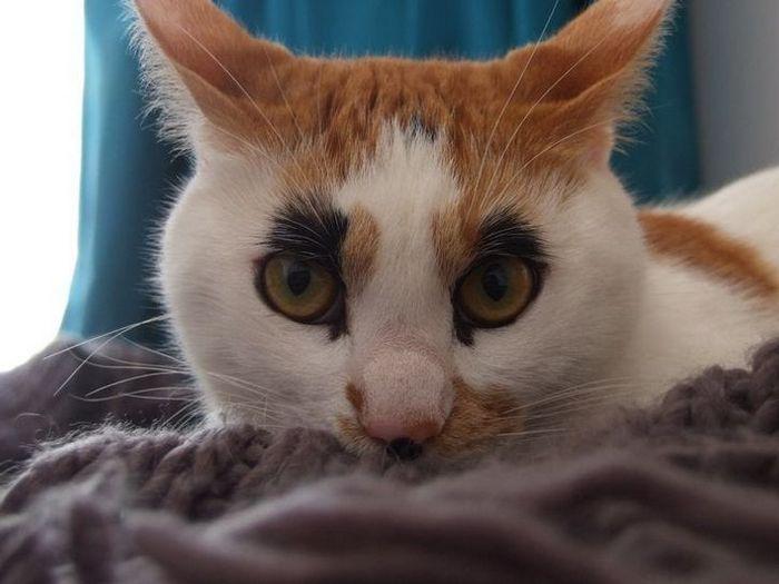 39 gatinhos que tem características únicas 25