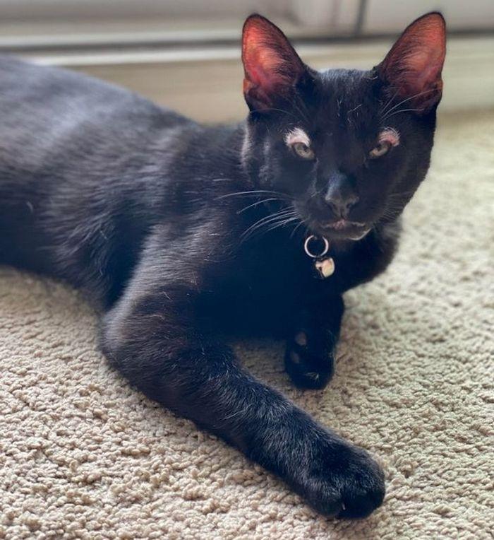 39 gatinhos que tem características únicas 26