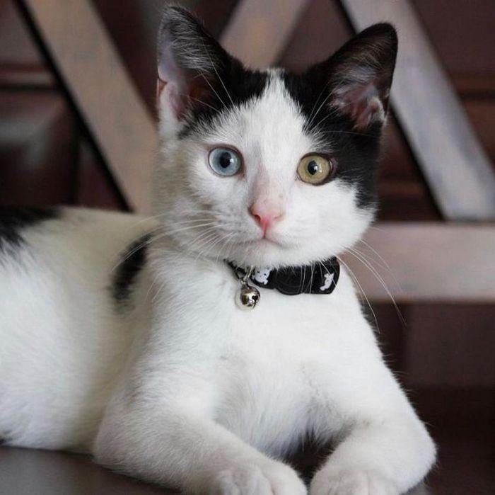 39 gatinhos que tem características únicas 28