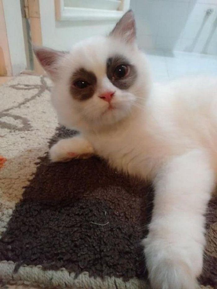 39 gatinhos que tem características únicas 31