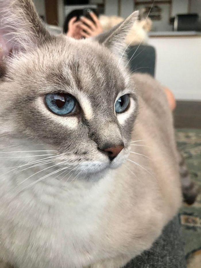 39 gatinhos que tem características únicas 32