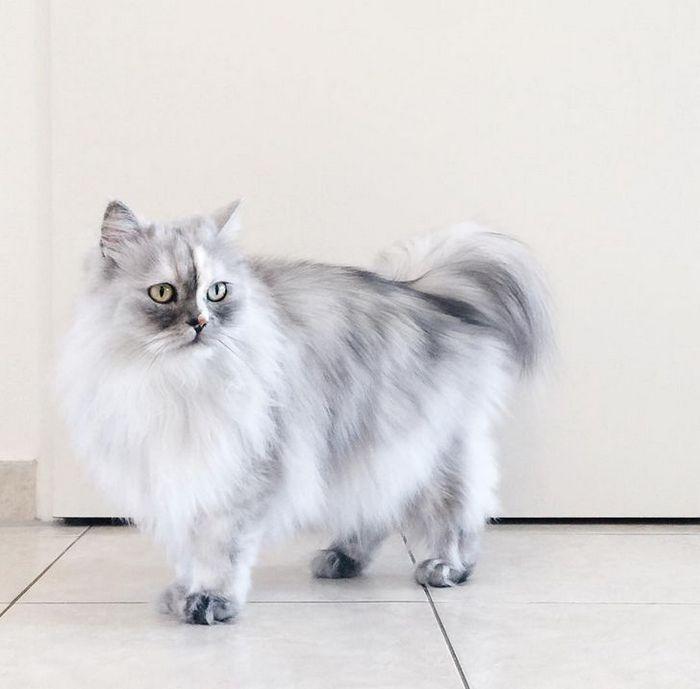 39 gatinhos que tem características únicas 33
