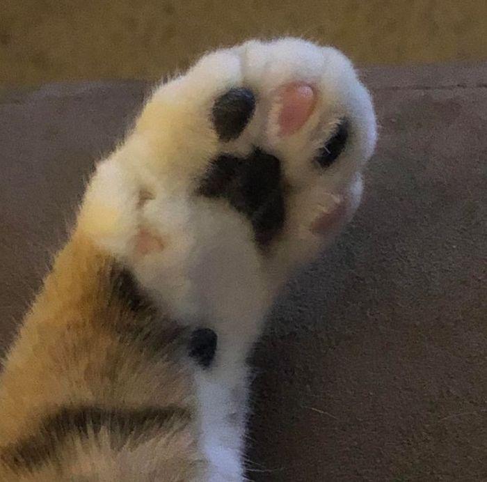39 gatinhos que tem características únicas 35