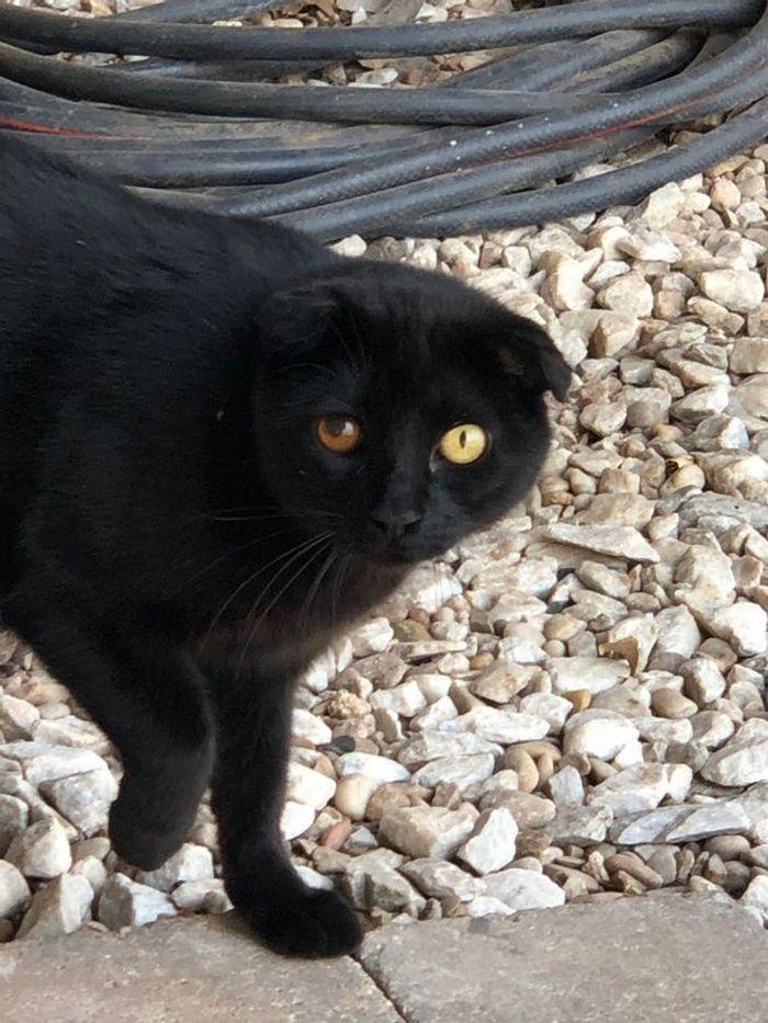 39 gatinhos que tem características únicas 36
