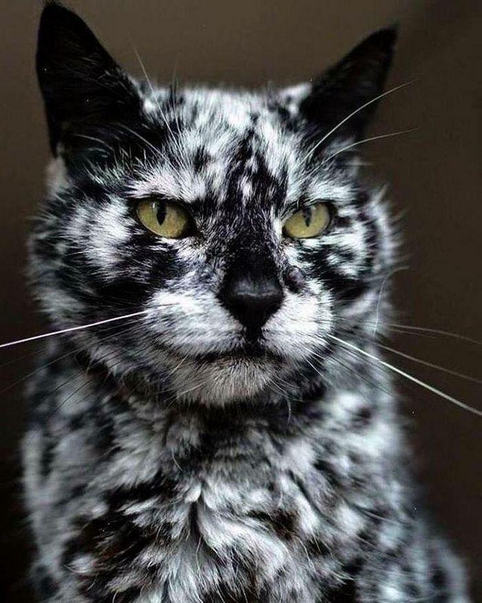 39 gatinhos que tem características únicas 37