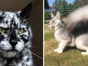 39 gatinhos que tem características únicas 45