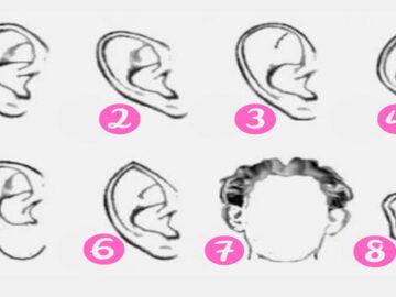 Qual é o formato de suas orelhas? 6
