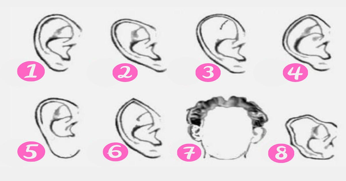 Qual é o formato de suas orelhas? 2