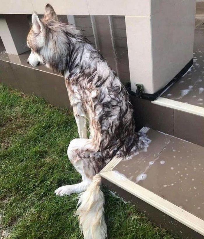 26 animais de estimação que não gosta de tomar banho 2