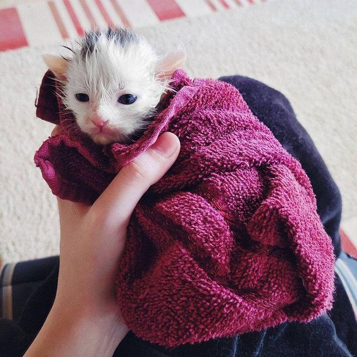 26 animais de estimação que não gosta de tomar banho 3