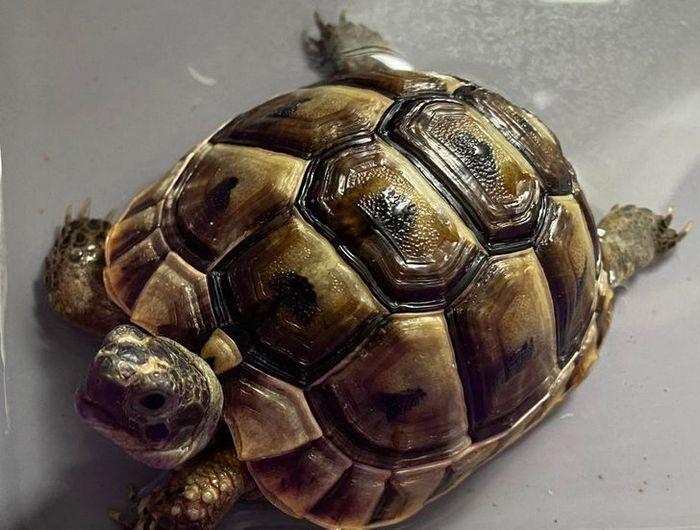 26 animais de estimação que não gosta de tomar banho 6