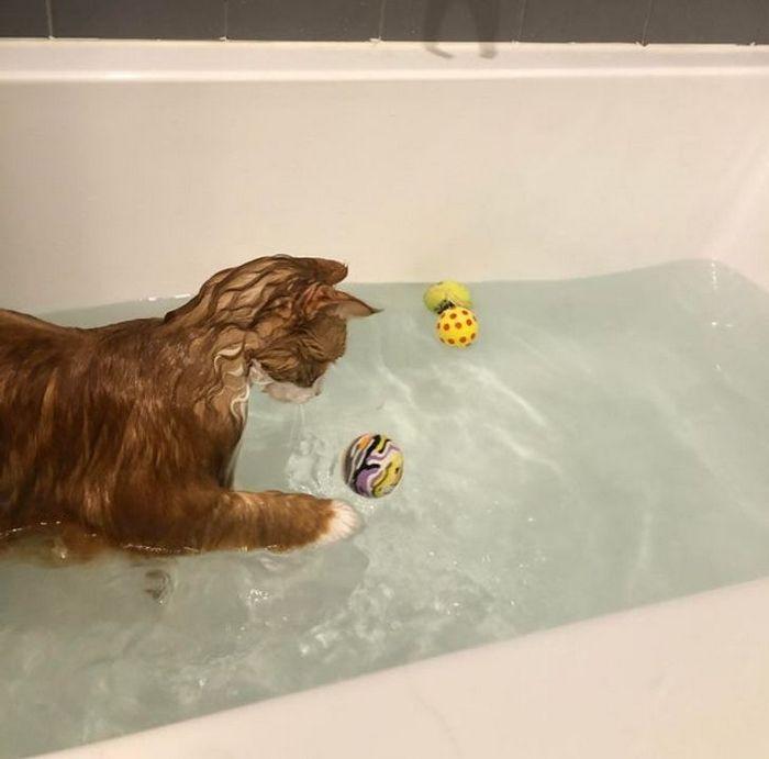 26 animais de estimação que não gosta de tomar banho 9