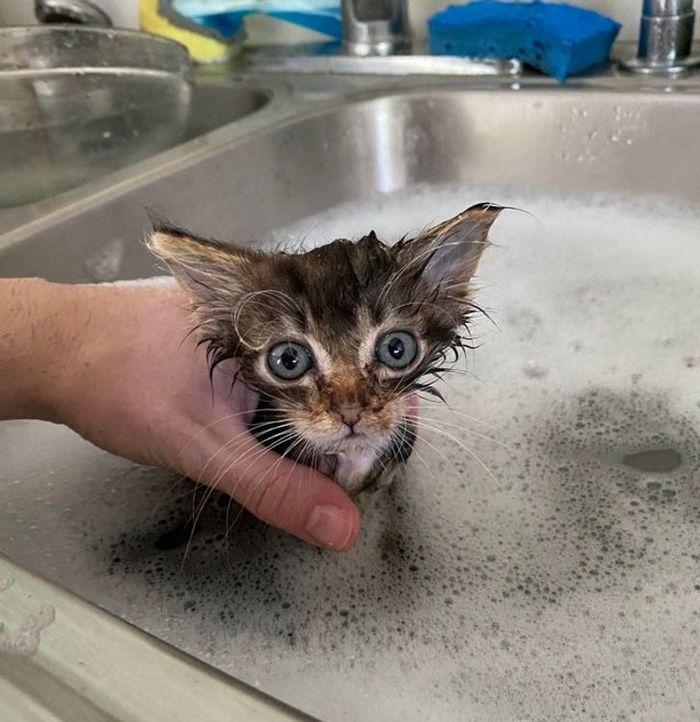 26 animais de estimação que não gosta de tomar banho 11