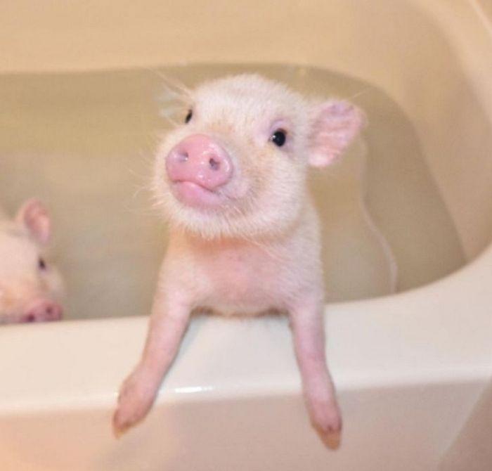 26 animais de estimação que não gosta de tomar banho 12