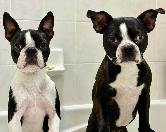 26 animais de estimação que não gosta de tomar banho 14
