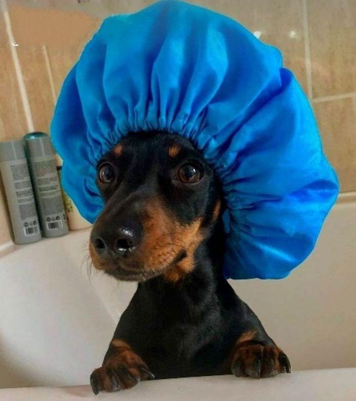 26 animais de estimação que não gosta de tomar banho 16