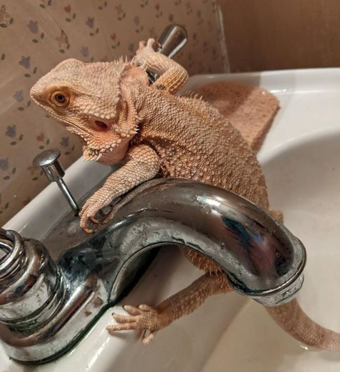 26 animais de estimação que não gosta de tomar banho 17