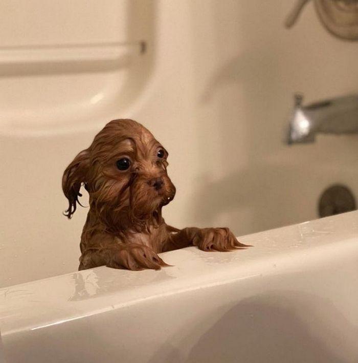 26 animais de estimação que não gosta de tomar banho 22