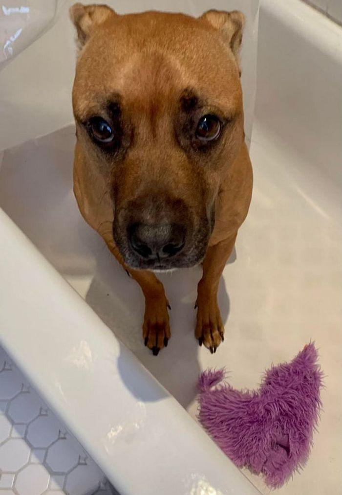 26 animais de estimação que não gosta de tomar banho 24
