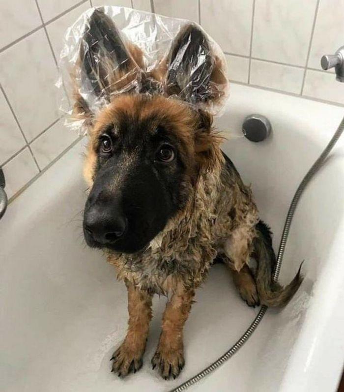 26 animais de estimação que não gosta de tomar banho 27