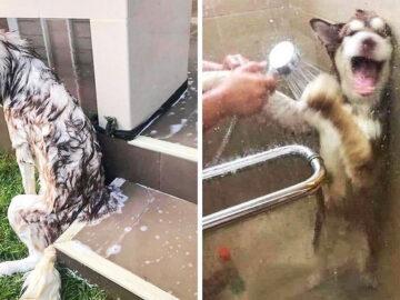 26 animais de estimação que não gosta de tomar banho 20