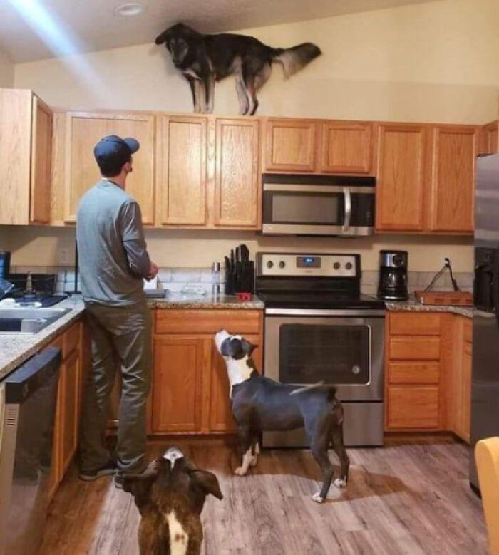 38 cachorros com defeito de fábrica que acham que são gatos 4