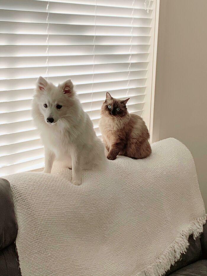 38 cachorros com defeito de fábrica que acham que são gatos 19