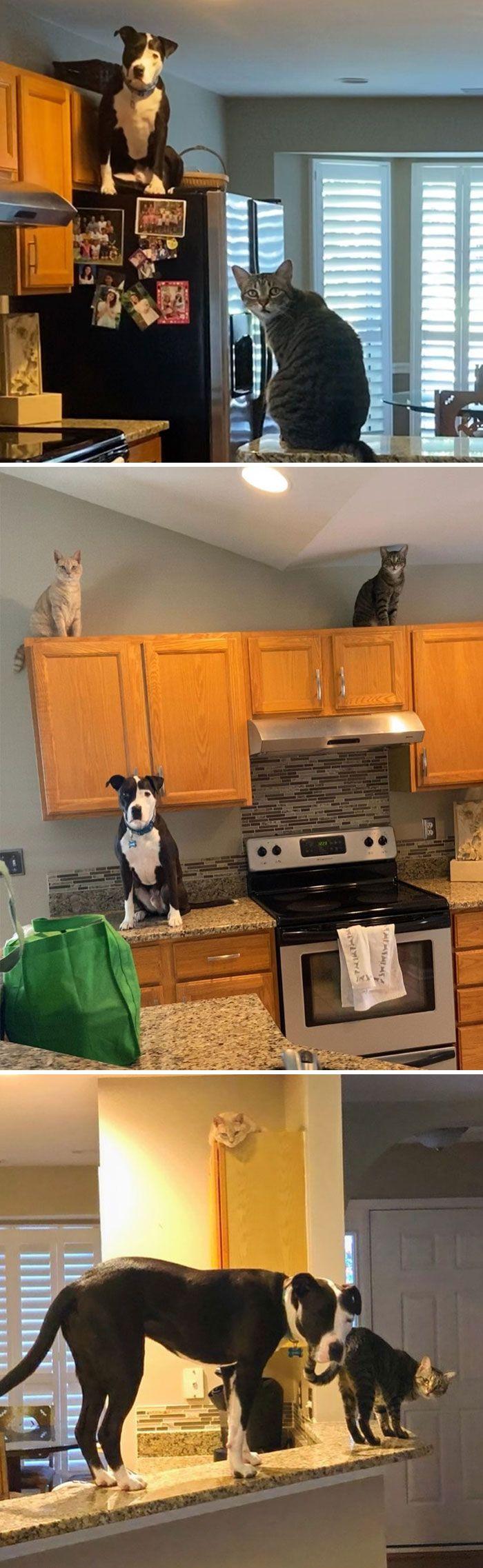 38 cachorros com defeito de fábrica que acham que são gatos 33