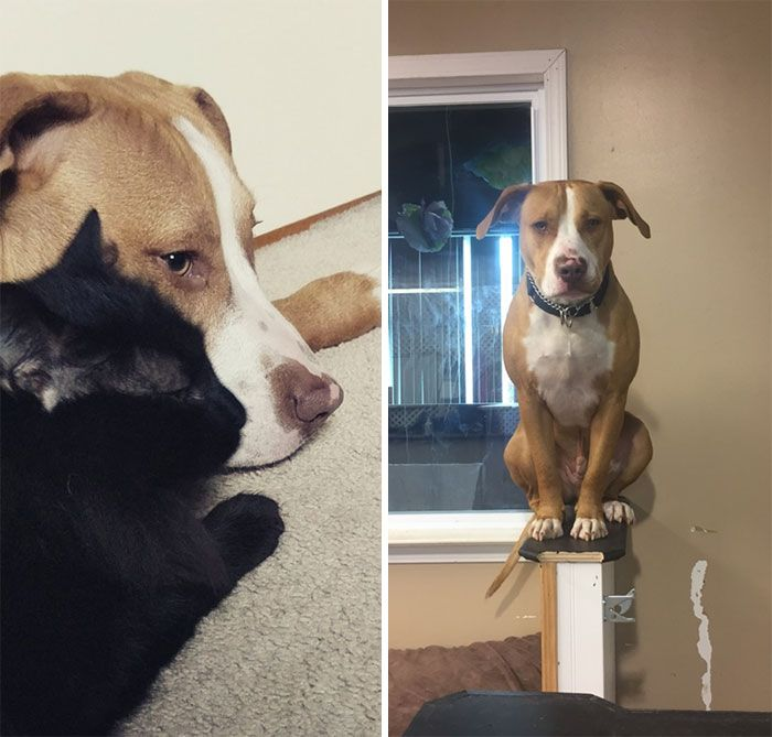 38 cachorros com defeito de fábrica que acham que são gatos 34