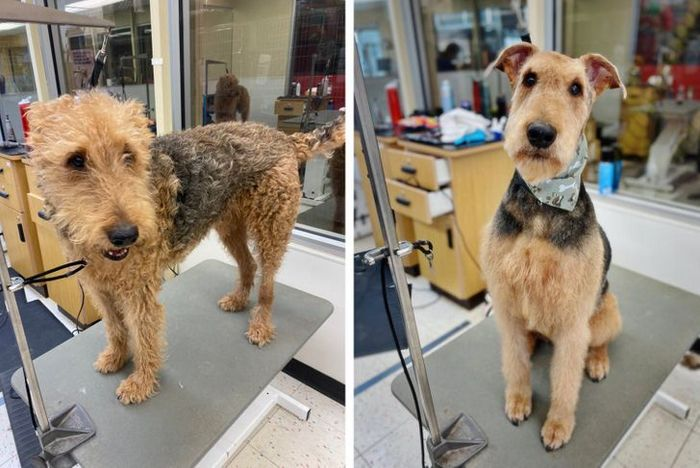 15 cães cujos donos não conseguiam reconhecê-los depois de pegá-los no pet shop 5