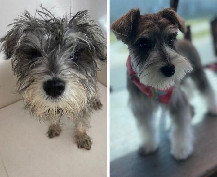 15 cães cujos donos não conseguiam reconhecê-los depois de pegá-los no pet shop 11