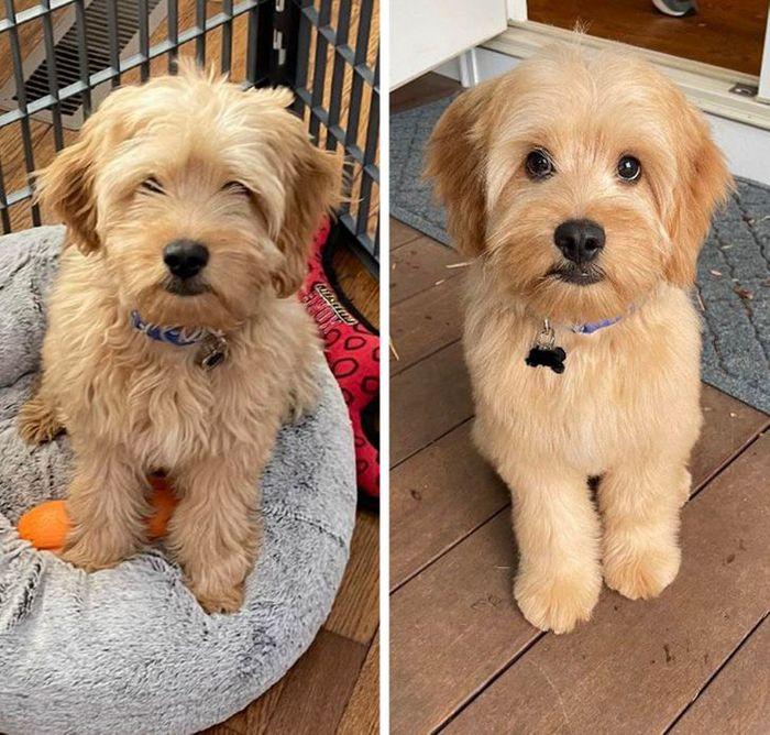 15 cães cujos donos não conseguiam reconhecê-los depois de pegá-los no pet shop 13