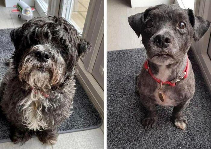 15 cães cujos donos não conseguiam reconhecê-los depois de pegá-los no pet shop 14