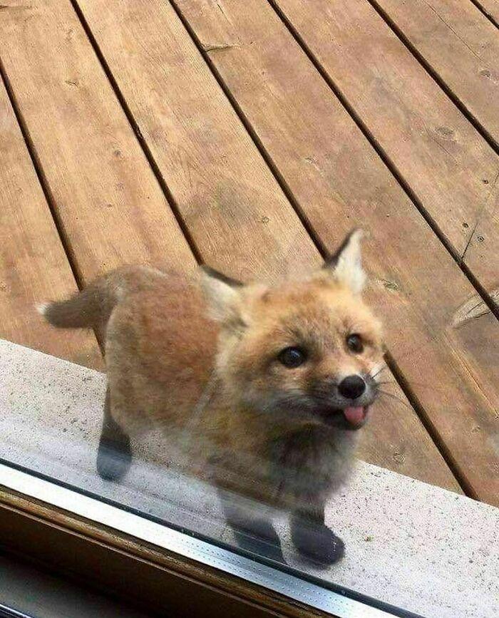 Conta do Instagram com fotos de animais fofos e engraçados (51 fotos) 3