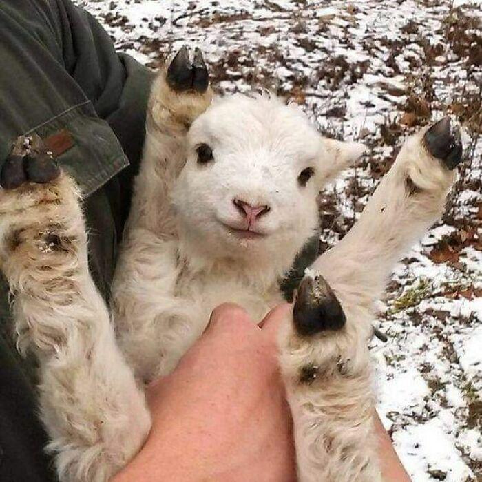 Conta do Instagram com fotos de animais fofos e engraçados (51 fotos) 4