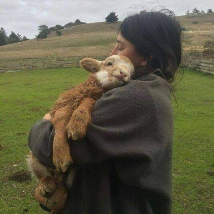 Conta do Instagram com fotos de animais fofos e engraçados (51 fotos) 5