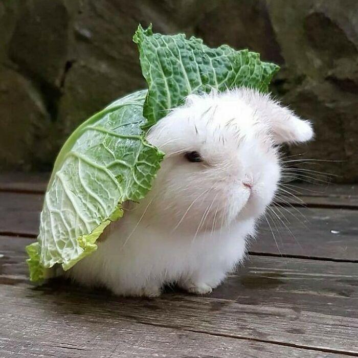 Conta do Instagram com fotos de animais fofos e engraçados (51 fotos) 7