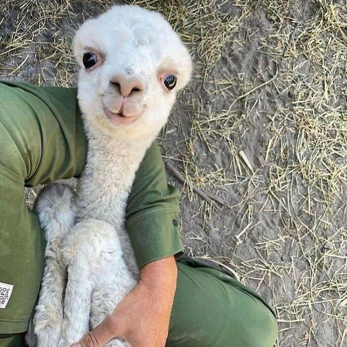 Conta do Instagram com fotos de animais fofos e engraçados (51 fotos) 8