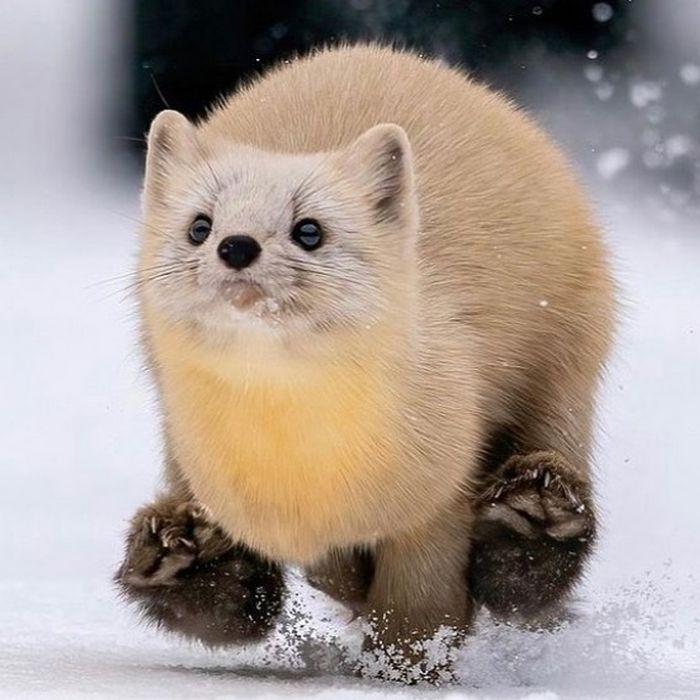 Conta do Instagram com fotos de animais fofos e engraçados (51 fotos) 9