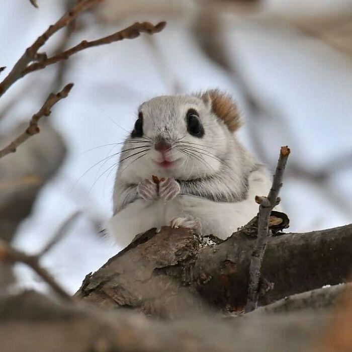 Conta do Instagram com fotos de animais fofos e engraçados (51 fotos) 11