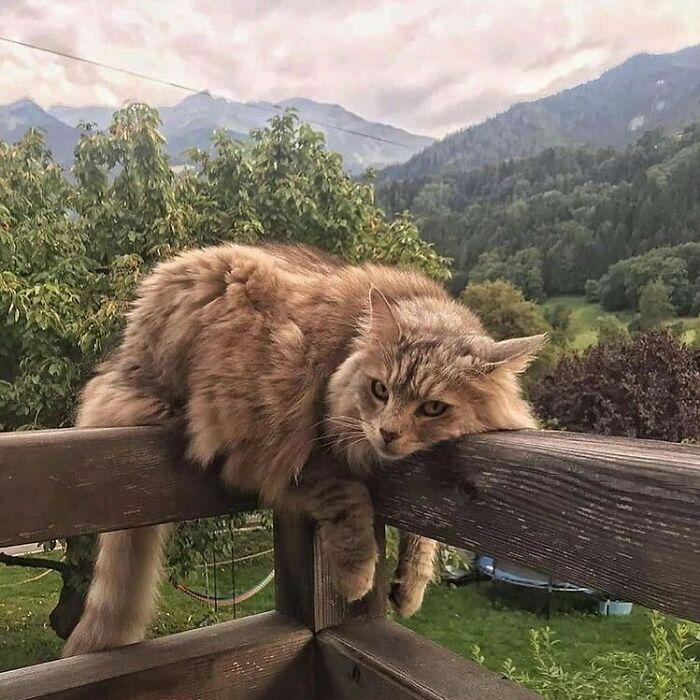Conta do Instagram com fotos de animais fofos e engraçados (51 fotos) 15