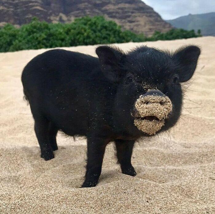 Conta do Instagram com fotos de animais fofos e engraçados (51 fotos) 16