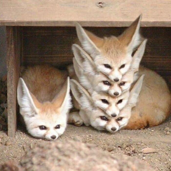 Conta do Instagram com fotos de animais fofos e engraçados (51 fotos) 17