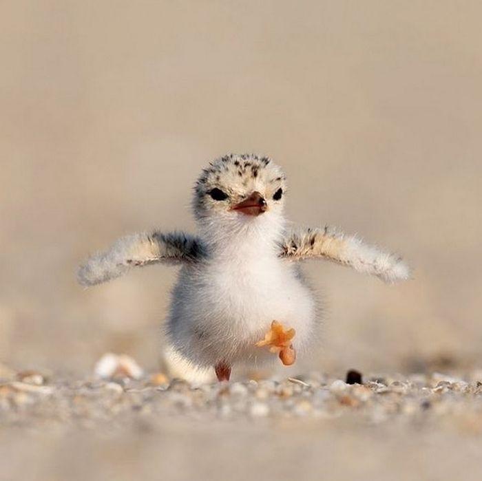 Conta do Instagram com fotos de animais fofos e engraçados (51 fotos) 18
