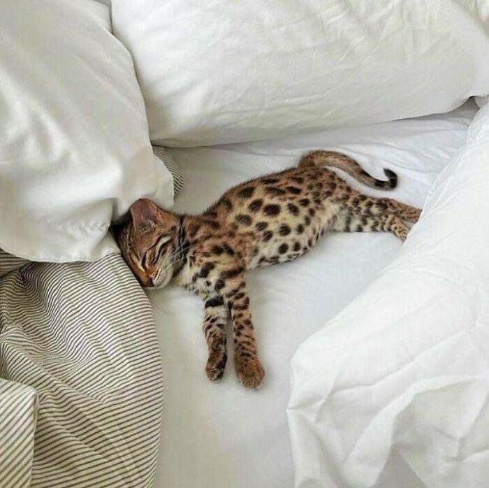Conta do Instagram com fotos de animais fofos e engraçados (51 fotos) 24