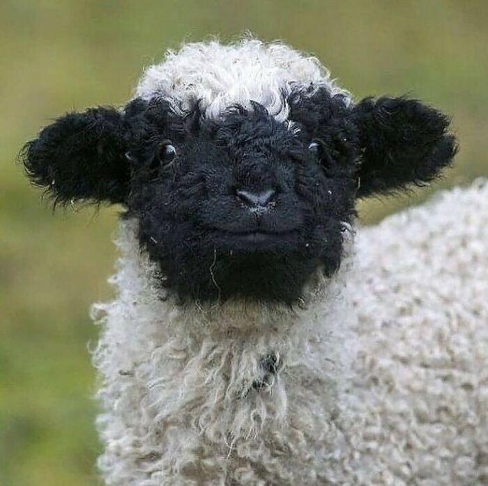 Conta do Instagram com fotos de animais fofos e engraçados (51 fotos) 25