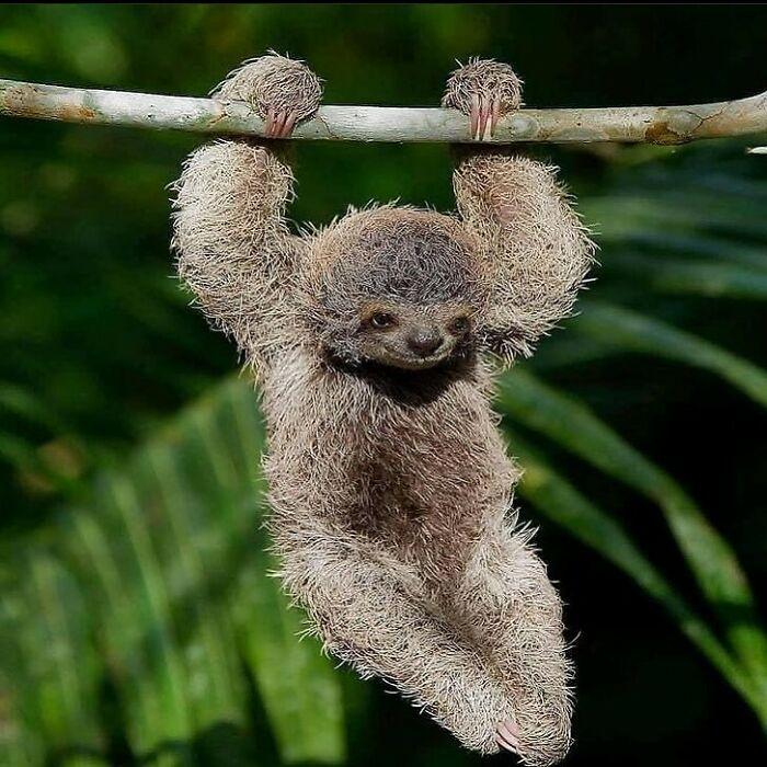 Conta do Instagram com fotos de animais fofos e engraçados (51 fotos) 29